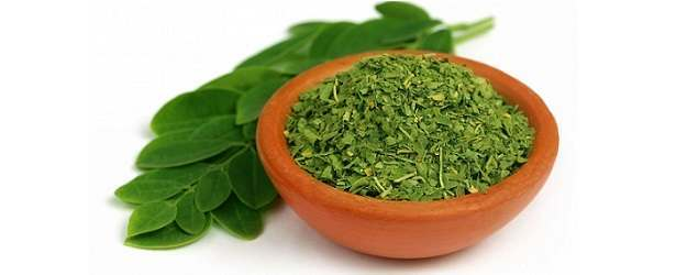 Will Moringa Tree Help You Lose Weight?