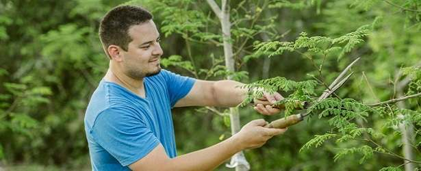 Is Moringa Tree a Perfect Food?