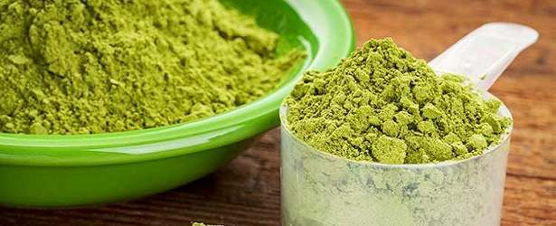 How Can You Use Moringa Oleifera?