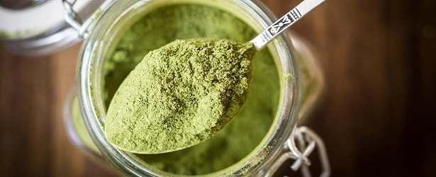 Moringa Oleifera for Breakfast?